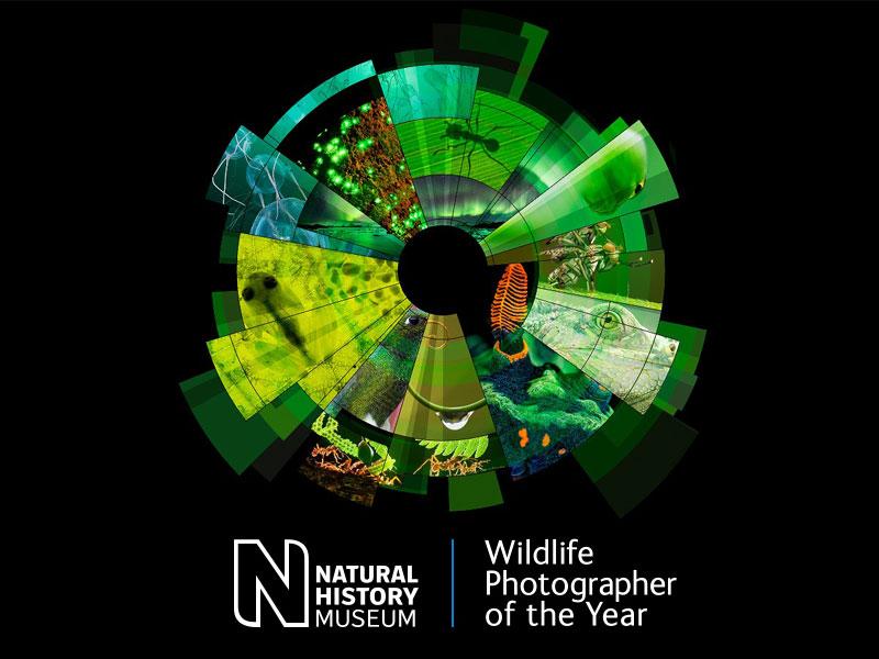 فراخوان مسابقه عکاس سال «حیات وحش» WPY 54 مجله عکس نوریاتو