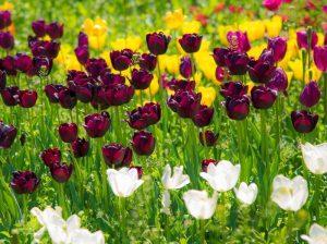 عکاسی از گلها
