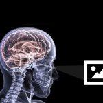 .زیباییشناسی عصبی؛جایی که علم با هنر عکاسی تلاقی میکند