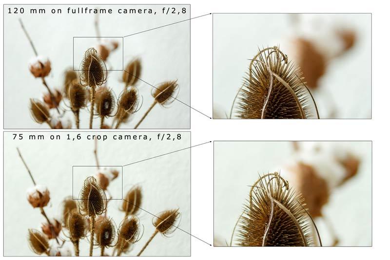 مفهوم عمق میدان در عکاسی