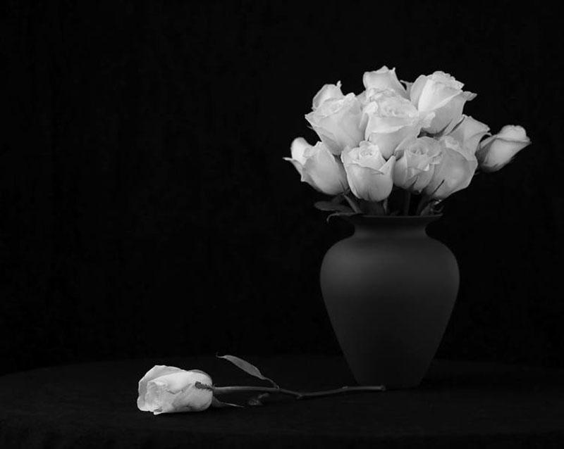 عکاسی سیاه سفید ⭐| راهنمای کامل آموزش عکاسی سیاه و سفید-مجله نورنگار
