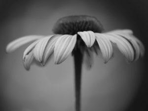 راهنمای کامل عکاسی سیاه و سفید حتی برای مبتدیان