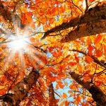عکاسی از رنگ های پاییزی