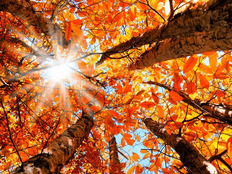 عکاسی از رنگ ها در فصل پاییز