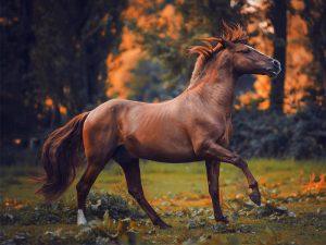 ۲۴ نکته ضروری برای عکاسی از اسبها