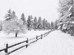 ۱۳ نکته برای عکاسی از برف