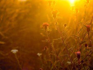 ۳۰ نکتهی ضروری برای عکاسی در ساعت طلائی