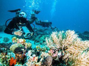 آموزش عکاسی زیر آب برای مبتدیها