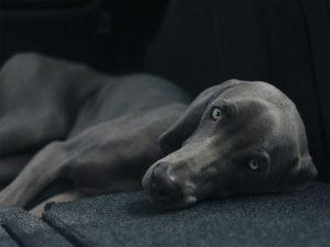 آموزش عکاسی از حیوانات خانگی برای مبتدیها